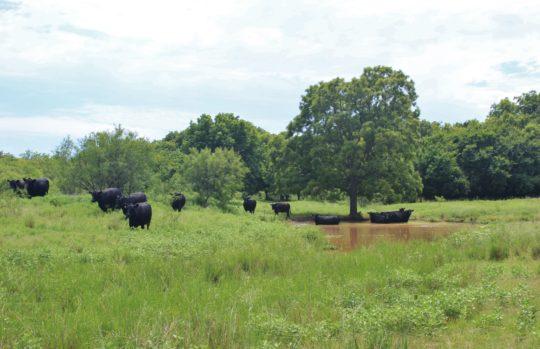 Little Wichita River Ranch