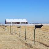 North Fork Cattle Ranch