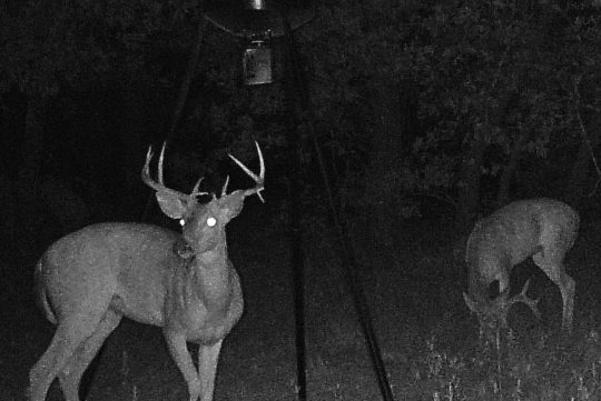 North Texas Hunting Property