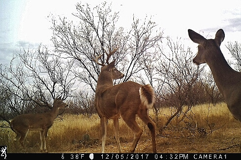 Foard County Hunting Tract