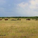 Windthorst Ranch