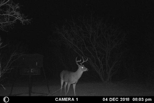 FM 2585 Hunting Ranch