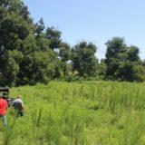 Irrigable Coastal Farm